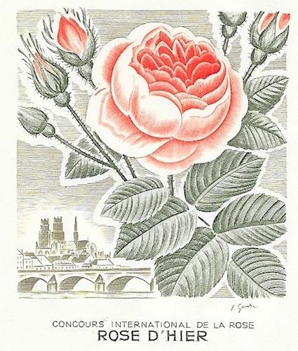 1962 rose d hier 1