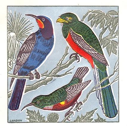1963 gabon oiseaux